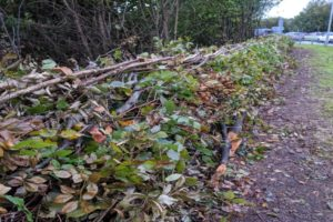 From Coppice to Copper